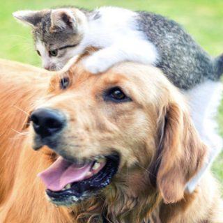 Muestra GRATIS de Comida para tu Mascota Canidae